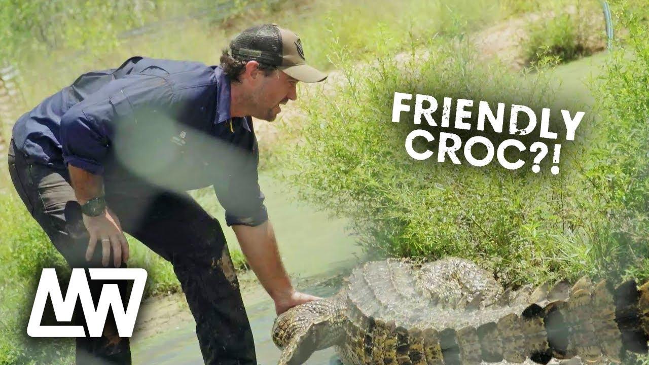 Download Hand Feeding A Friendly Croc?! | Full Episode | Matt Wright (Ep10)