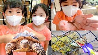 หนูยิ้มหนูแย้มดูหนอนแมลงสัตว์น่ารัก Siam Insect Museum Chiang Mai Travel