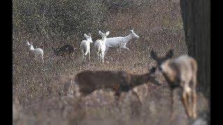 Seneca White Deer Tours at former Army Depot