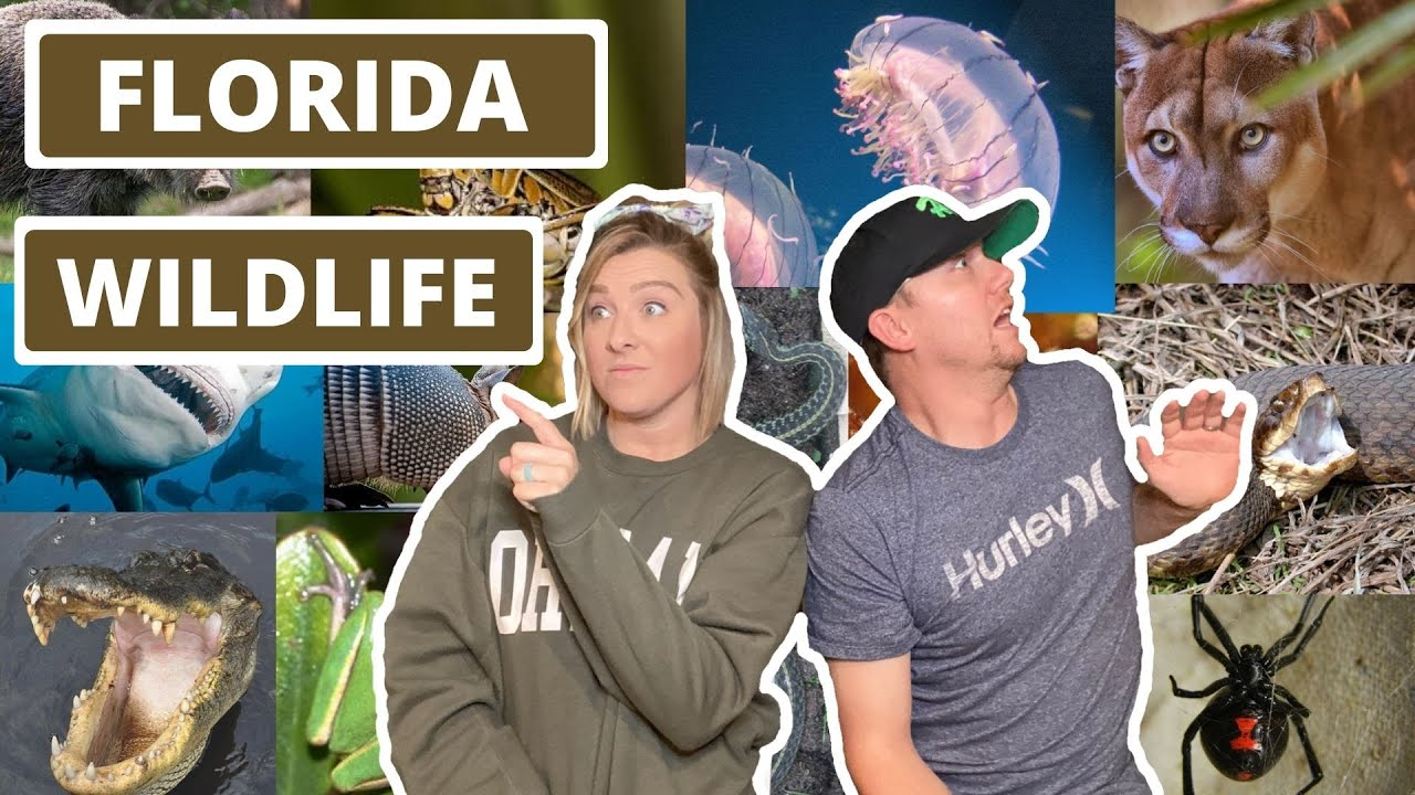 Download What Kind of Animals Live in Florida? - Critters and other Animals you will See living in Florida