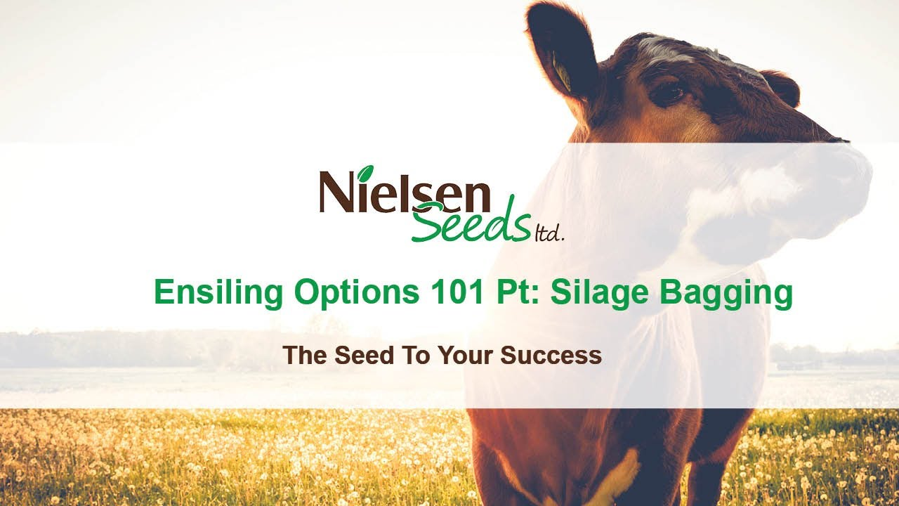 Ensiling Options 101: Pt 1 Silage Bagging