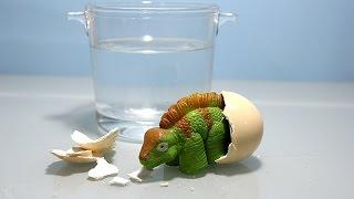 Toy Dinosaur Egg growing in Water | Huevo de dinosaurio crece en el agua