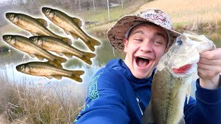 Minnow Trapping for Live Bait!