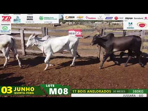 LOTE M08