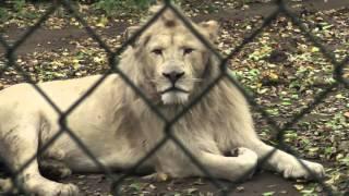 Olmense Zoo 2015