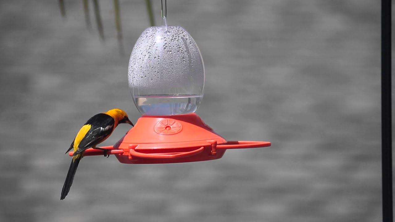 plastic feeder apart fruit and oriole best p bird shop jelly recycled songbird essentials