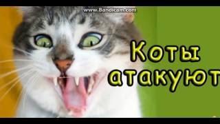 Попробуй не засмеятся|| Коты Атакуют XD