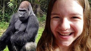 We Saw A Gorilla! Disney Kilmanjaro Safari Ride!