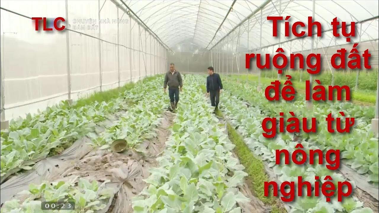Tích tụ ruộng đất để làm giàu từ nông nghiệp