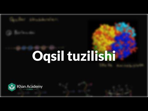 Oqsil tuzilishi | Uglerodning xususiyatlari | Biologiya | Khan Academy Oʻzbek