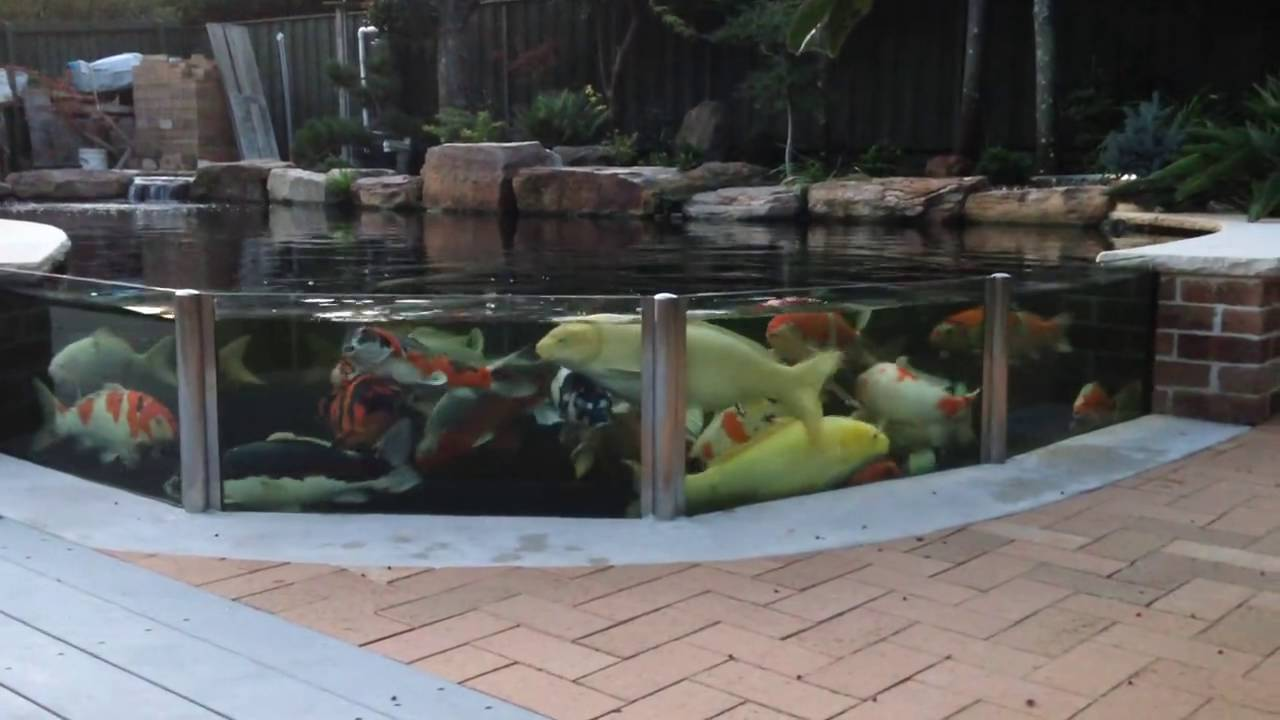 The world 39 s most beautiful koi pond youtube for Koi pond videos
