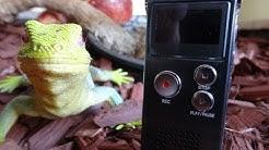 """HooToo 4GB digitales Diktiergerät / Aufnahmegerät"" für 26 Euro -Test"