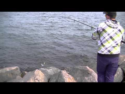 Angeln auf Hornhecht und Plattfisch in Dänemark Nyborg