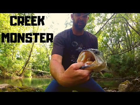 An AMAZING Day Of Creek Fishing!!  3 Black Bass Species