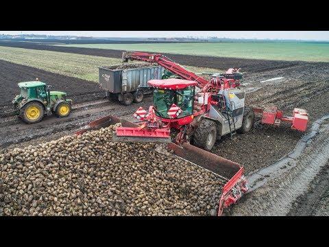 Holmer Terra Felis loading sugar beet + 14x John Deere Tractors | Zückerrüben überladen
