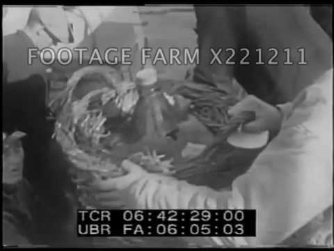 Arctic Adventure 2/2 - 221211-02X   Footage Farm