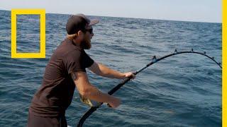 سمكة التونة العنيدة: آلة الحرب | ناشونال جيوغرافيك أبوظبي