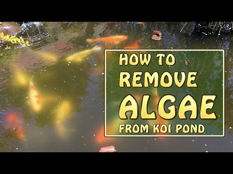 [4K] My Secret Weapon For Killing Algae