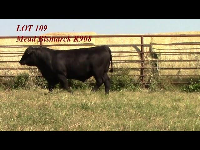 Mead Angus Lot 109