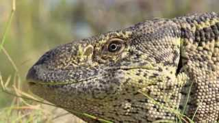 you have reptile bones in your ears hhmi biointeractive video