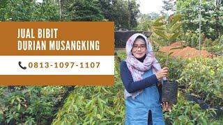 Jual Bibit Durian Musangking - 📞...