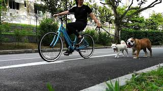 DOG SCARED OF CARS AND BIKES