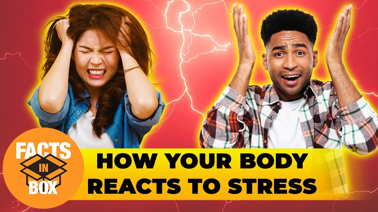 What's Dangerous about Stress? | Facts in box