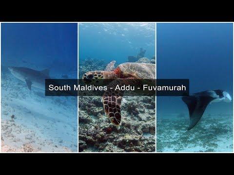 Scuba Diving at South Maldives - Tiger's Zoo - Fuvamurah - Addu Atoll