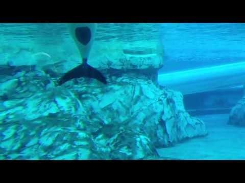 Aquatica Seaworld Orlando, Dolphins