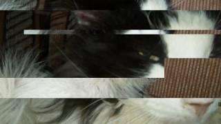 Пятое видео на канале Люби kotov