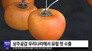 [대구MBC뉴스] 상주곶감...유럽 첫 수출