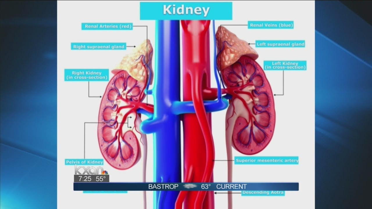 heart and kidney relationship in tcm