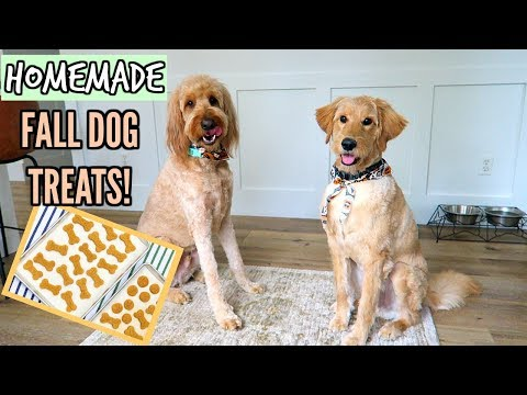 MAKING HOMEMADE DOG TREATS FOR OUR GOLDENDOODLES!