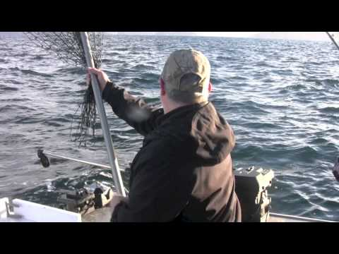 AOJ Homer Winter Feeder King Salmon Fishing Report 10-30-13 (HD Version)