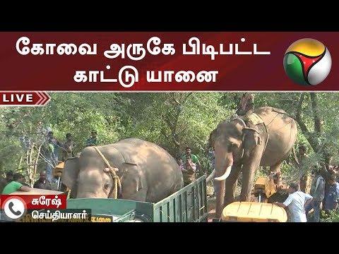 கோவை அருகே பிடிபட்ட காட்டு யானை  | #Elephant #Coimbatore