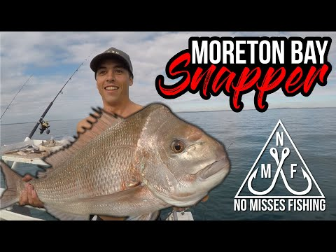 Moreton Bay Snapper & Jewfish - BAIT, TACKLE AND TECHNIQUES
