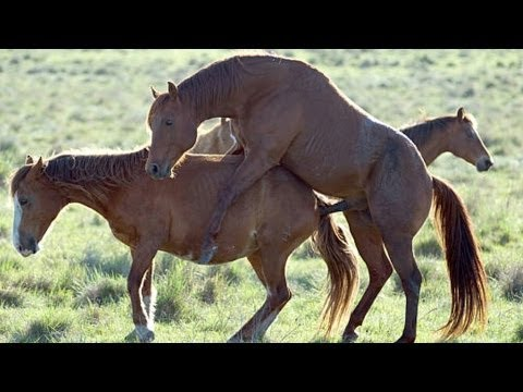 Horse mating video| Horse helper| caring your horse mate ...