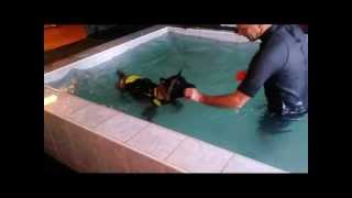 Pheobe Endurance Training In The Dog Swimming Pool Center 2013