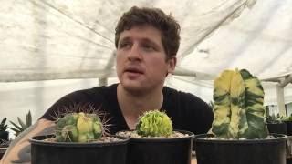 Грунт для кактусов - сажаем колючих питомцев правильно!