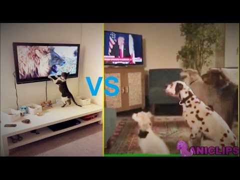 Dogs VS Cats : Reaction While Watching TV