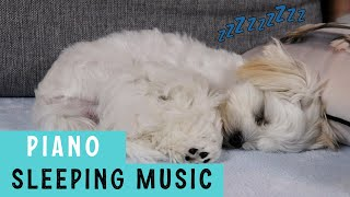 DOG MUSIC FOR SLEEPING  Relaxing Piano Music  Cute Maltese Puppy Video Compilation