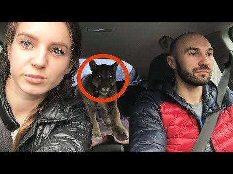 La coppia porta a casa l'animale malato. Nessuno...