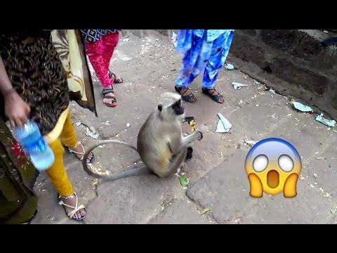 Funny Monkeys at Udayagiri & Khandagiri Caves in Bhubaneshwar Orissa
