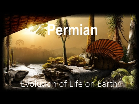 The Evolution of Life part 7 : Permian