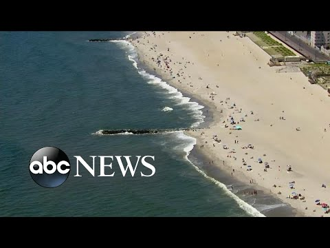 Maine woman dies of apparent shark attack