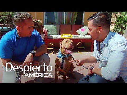 Luis Sandoval entrenó a su perro con el mismísimo César Millán