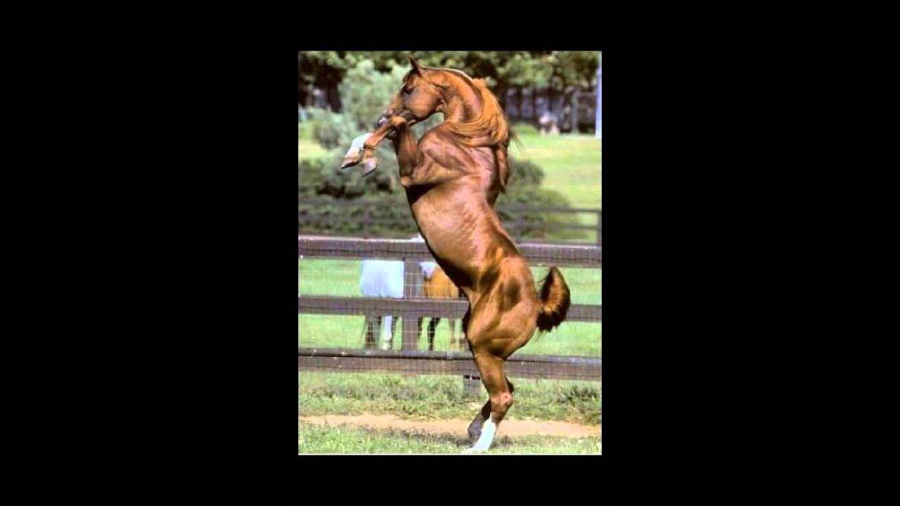 Canzone rilassante foto di cavalli youtube for Immagini cavalli stilizzati
