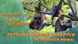 Окружающая среда. Летучие мыши Беларуси | Природа Беларуси – Остров Ду с Еленой Вахромеевой