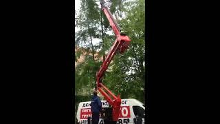 Спасение кошки с дерева в старых Химках