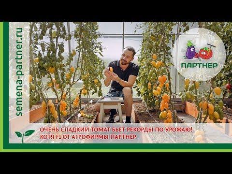 ОЧЕНЬ СЛАДКИЙ ТОМАТ бьет рекорды по урожаю! Котя F1 от агрофирмы ПАРТНЕР | индетерминантн | выращивание | агрофирмы | агрофирма | томатов | партнер | томаты | семена | купить | томат